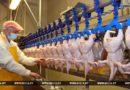 Беларусь рассчитывает отправить первую партию мяса птицы в Китай до середины 2018 года
