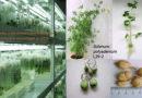 26.03|11.00 Пресс-конференция «Генетический банк растений – основа продовольственной и биологической безопасности»